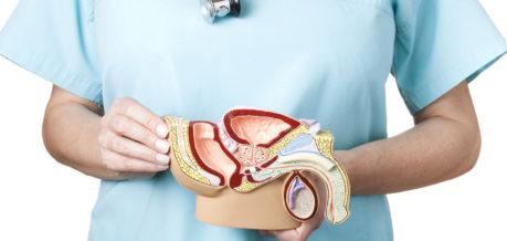 Ультразвуковое исследование. УЗИ простаты, мочевого пузыря и др.