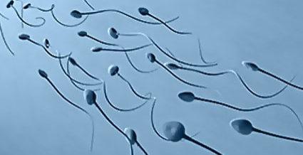 Как сдать спермограмму. Подготовка к сдаче спермограммы